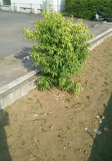 裏の樹木.jpg